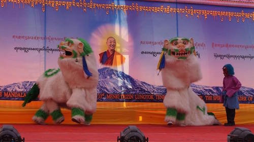 Snow lions at the cultural show